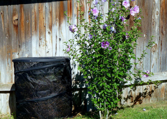 1-hibiscus-and-fiskar-composter_width579